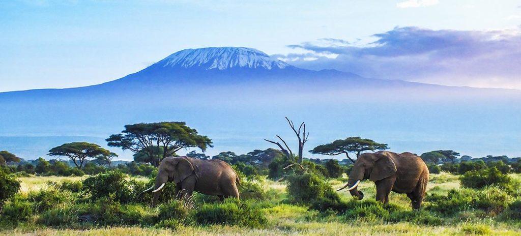 kili elephant2